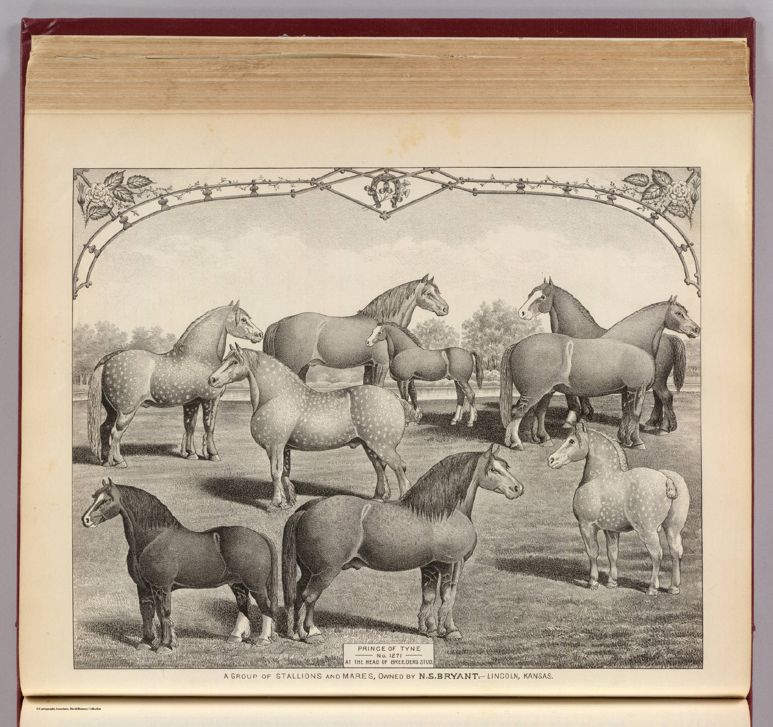A group of stallions and mares, Lincoln, Kansas.