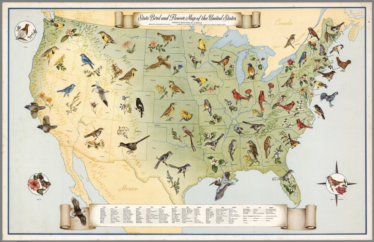 State Bird And Flower Map Of The United States David Rumsey