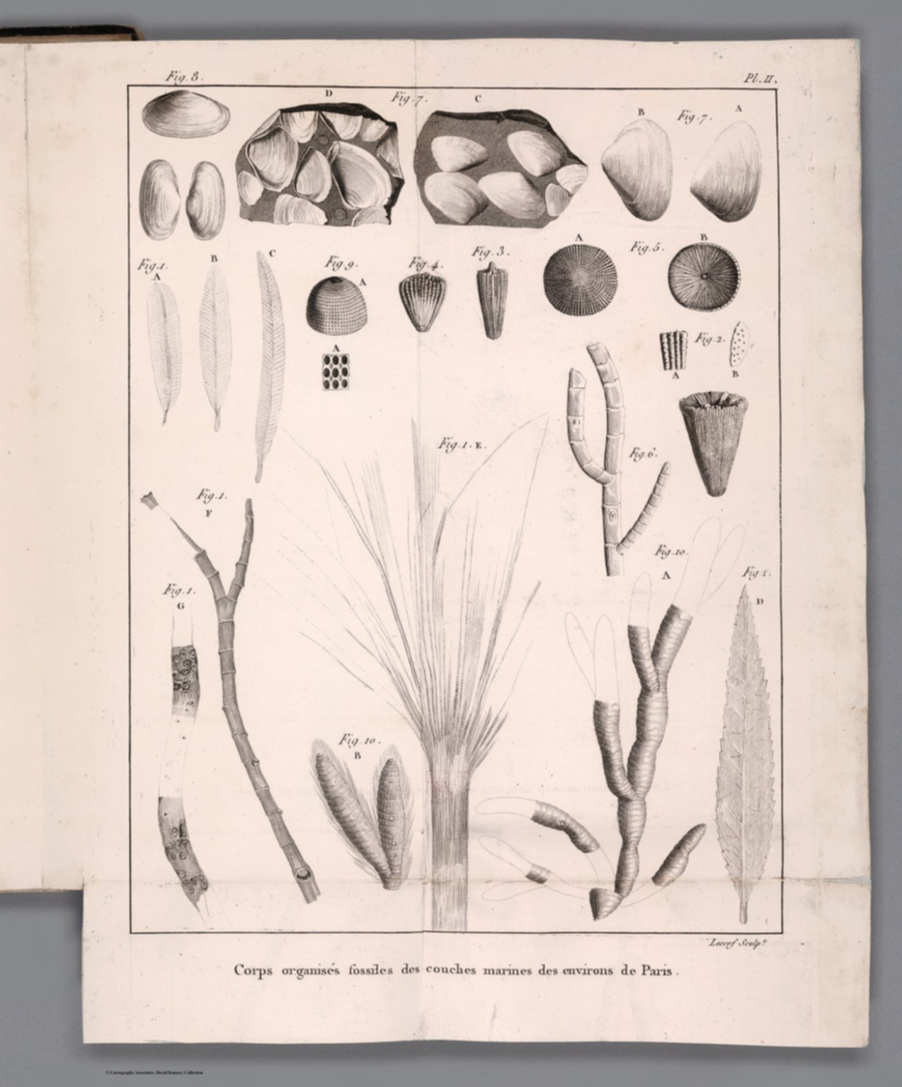 Pl. II. Corps organises fossiles des couches marines des environs de Paris